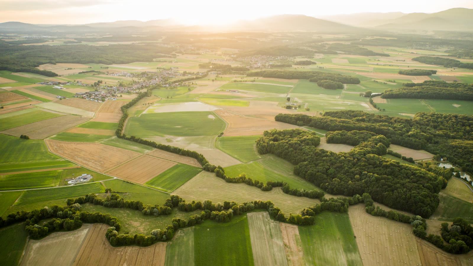 Champs Plaine d'Alsace