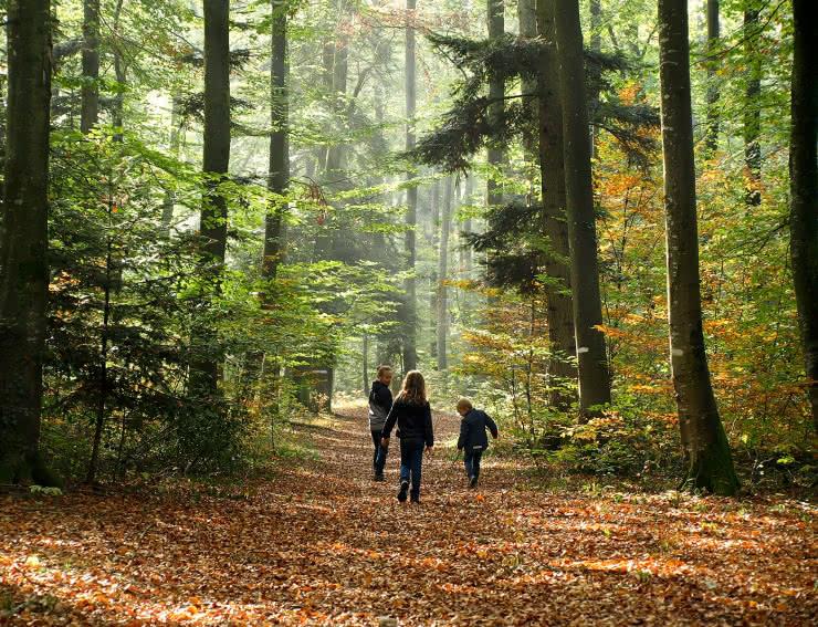 Balade forêt Sundgau