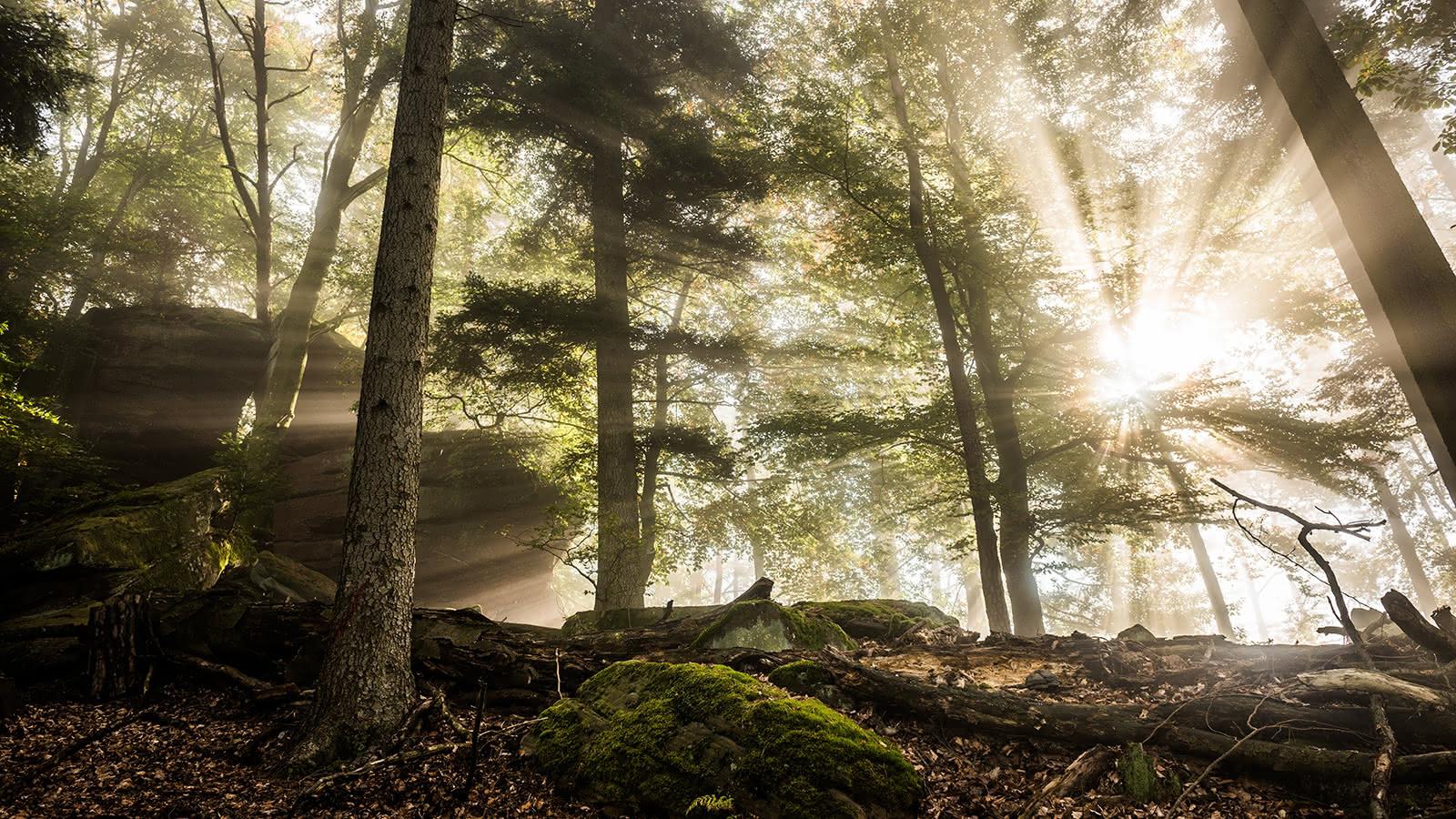 Forêt - Vosges du Nord