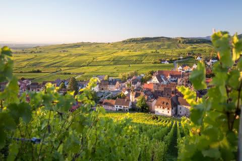 Les Perles du Vignoble-Riquewihr-Route des Vins d'Alsace