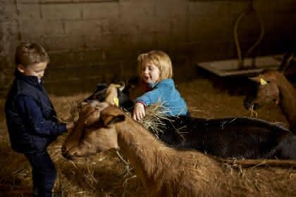 Chèvrerie Le Solet à Solbach