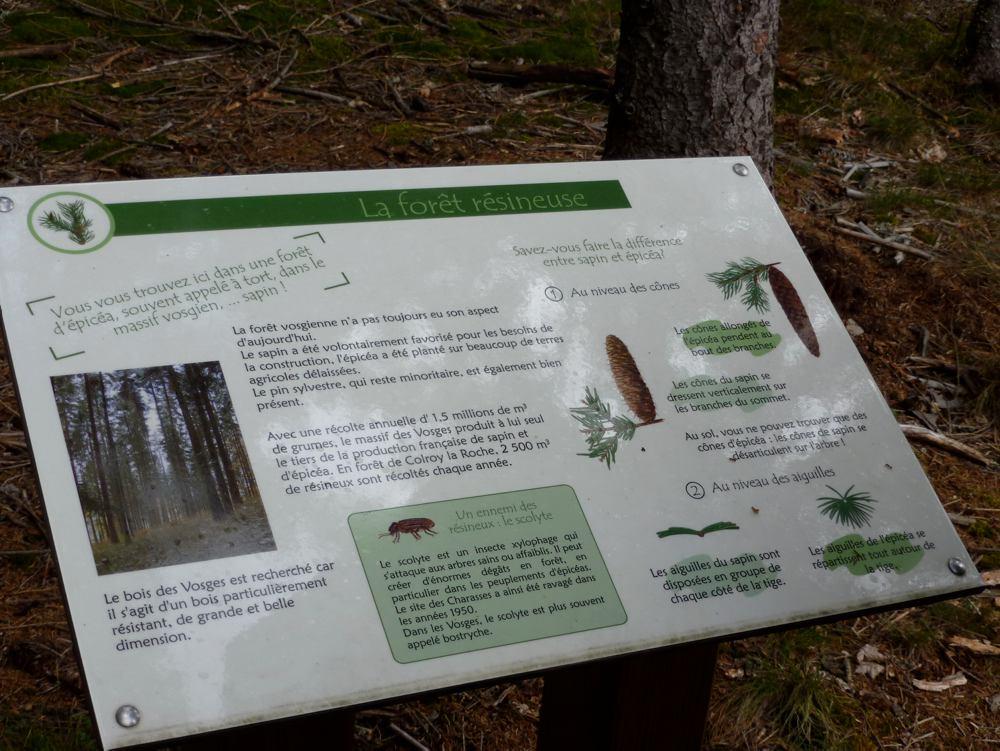 Sentier de découverte de la forêt