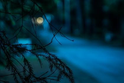 bain de forêt nocturne- libre de droits