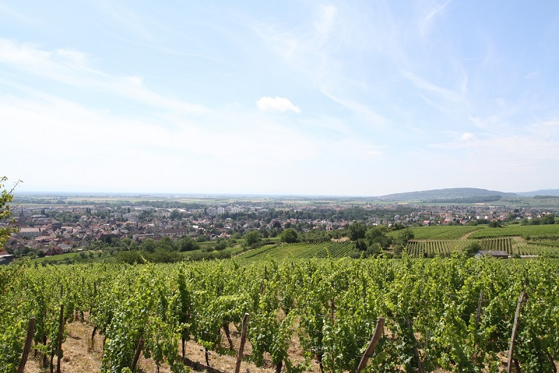 Ville de Molsheim