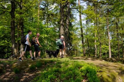 Séjour randonnée, Alsace, au plus près du Grand Wintersberg