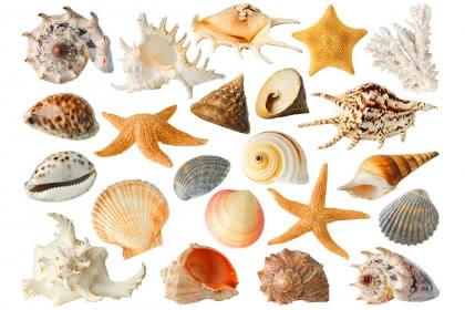 AdobeStock_38245799@Anna Kucherova_isolated sea objects