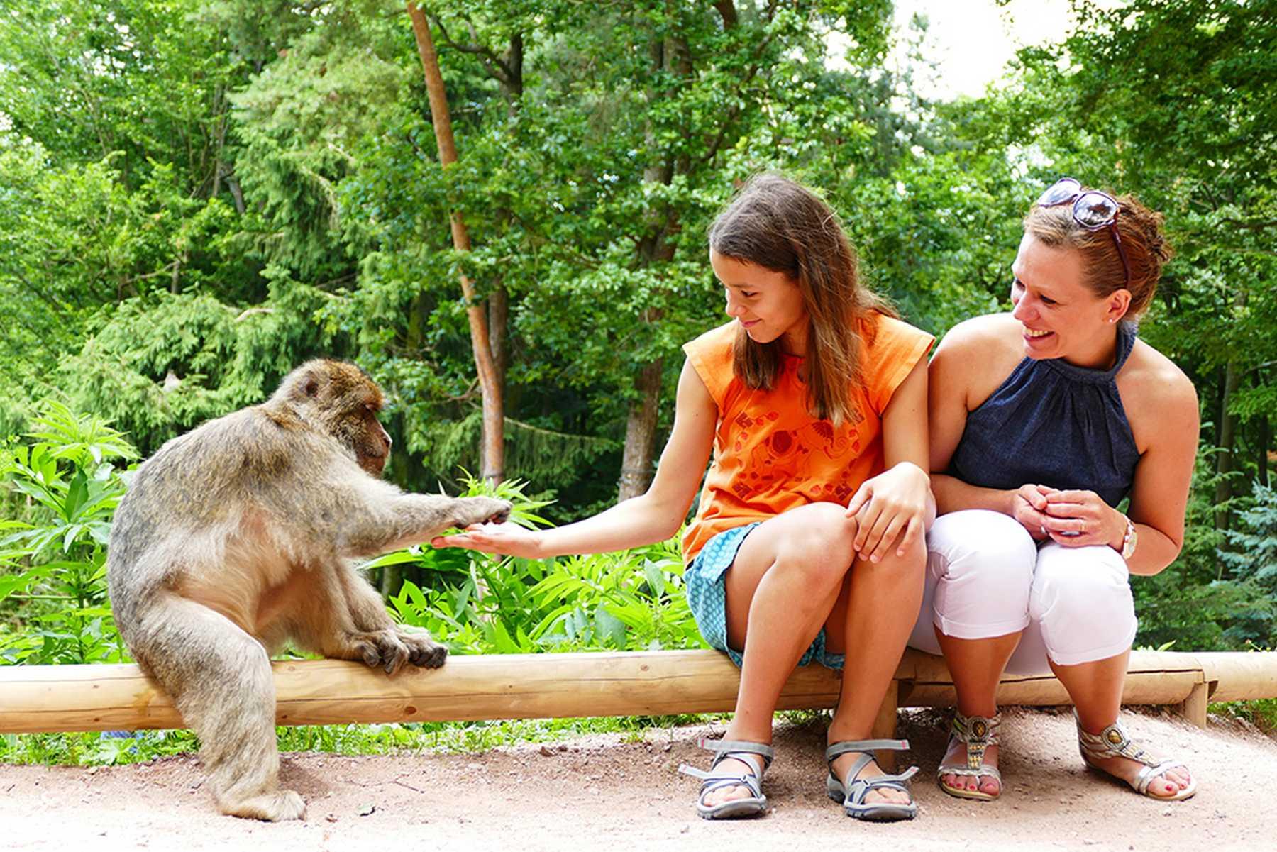Monkey mountain | Visit Alsace