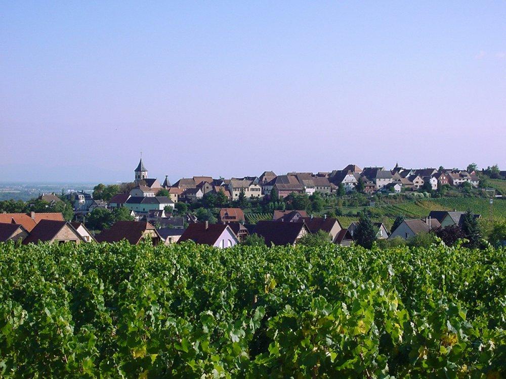 Crédit photo : Office de Tourisme du Pays de Ribeauvillé et Riquewihr