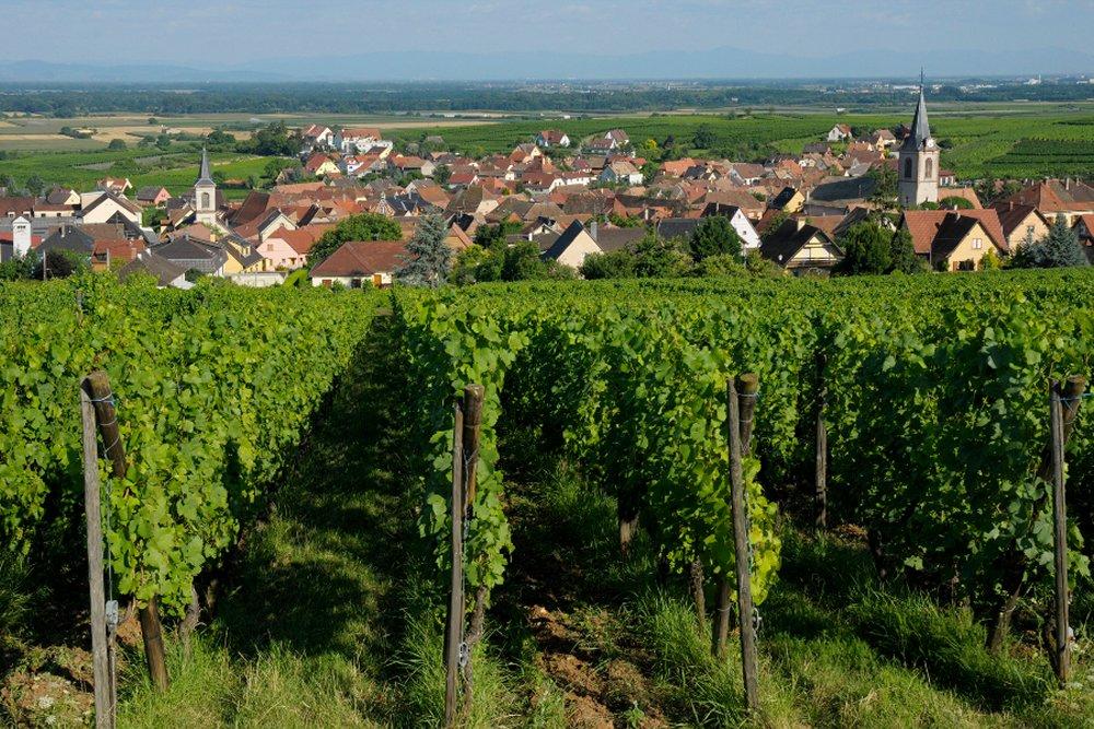 Crédit photo : C Dumoulin / Office de Tourisme du Pays de Ribeauvillé et Riquewihr