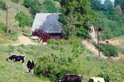 Fromagerie : Ferme du Lameysberg