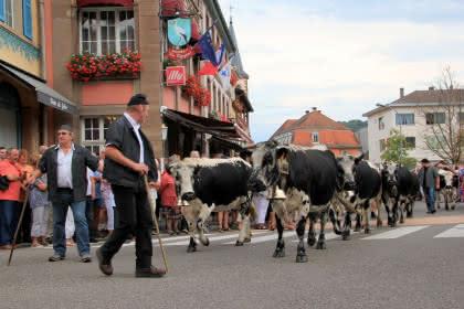 Fête de la transhumance et de la tourte - Munster