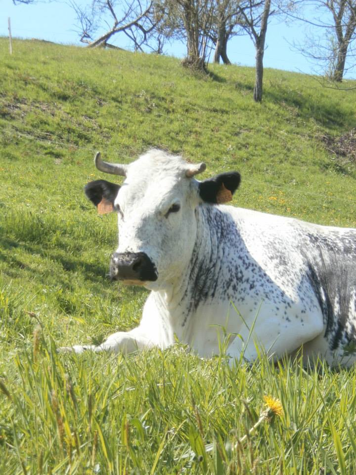 La Ferme de l'Estive - Sondernach - Vallée de Munster