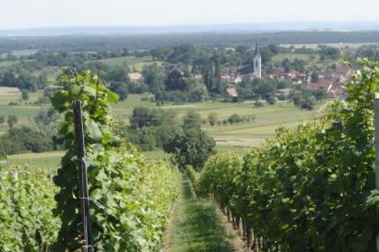 Sentier viticole de Wuenheim, vue du Hartmannswiller - crédit L. Gorkiewicz