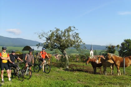 Mountainbiken auf der Höhe des Hartmannswiller