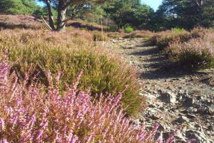 Circuit randonnée et trail Buhl Lautenbach entre grès et granit Crédit: P. Maginot