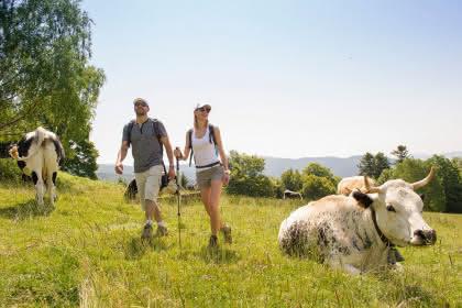 Randonnée sur le GR5 Crédit: INFRA Massif des Vosges