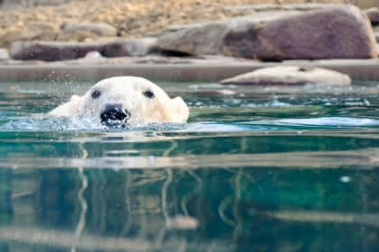 © Zoo de Mulhouse
