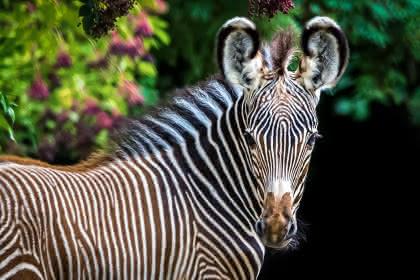 ©Parc zoologique et botanique - Mulhouse