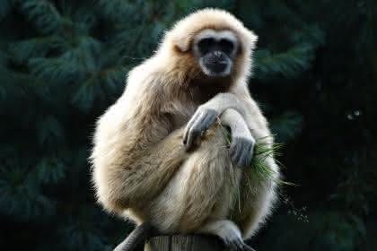 © Parc zoologique et botanique