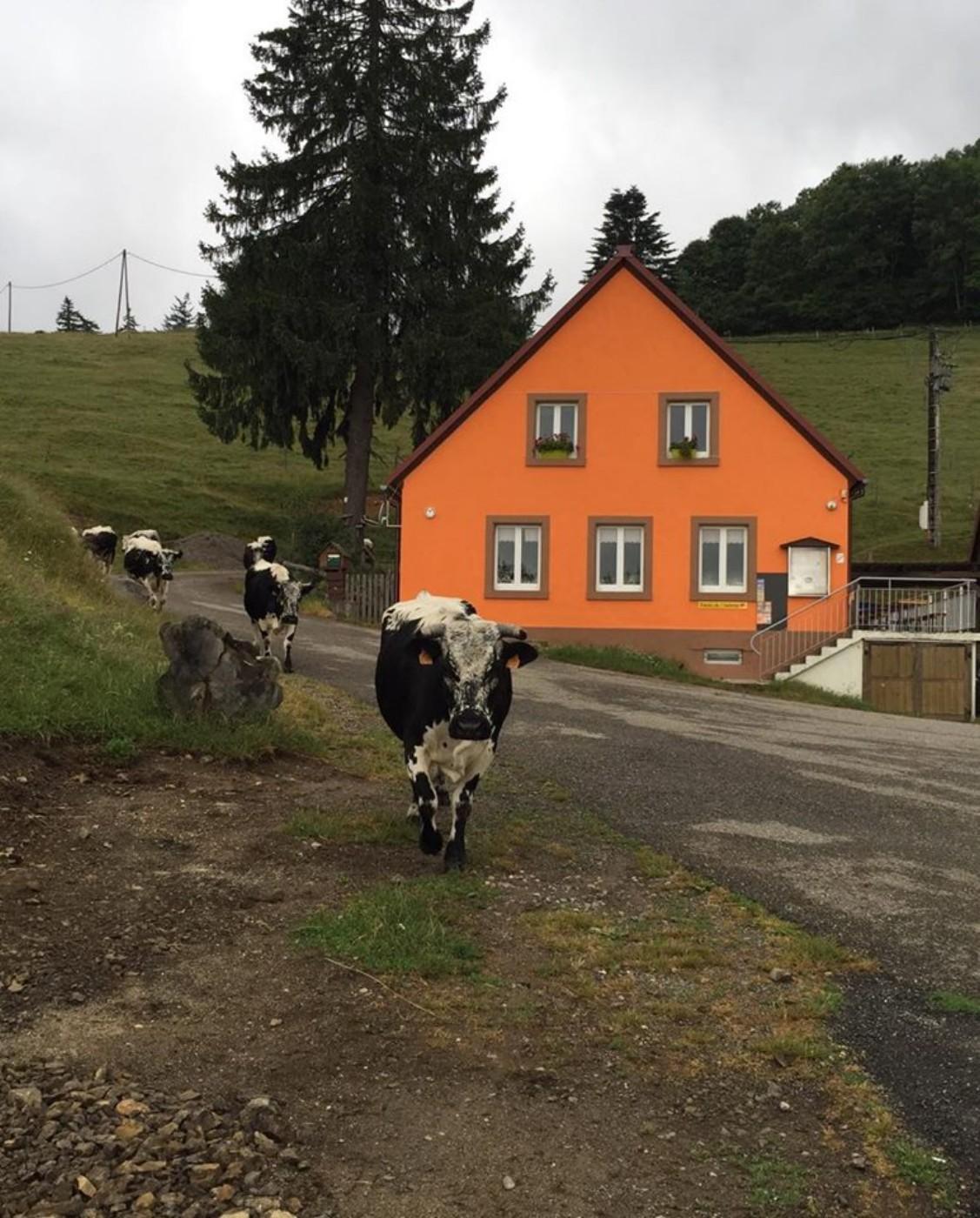 Vue générale de la ferme ©Ferme-auberge du Kohlschlag