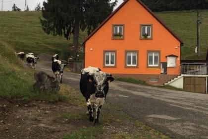 Extérieur de la ferme ©Ferme-auberge du Kohlschlag