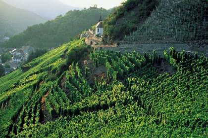 Vue sur le vignoble et la ville ©CIVA