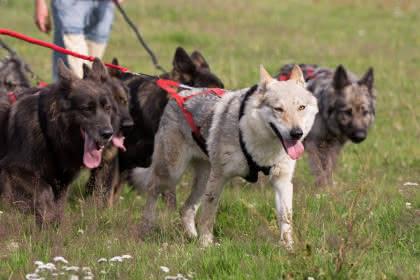 @ Légende du Loup Noir