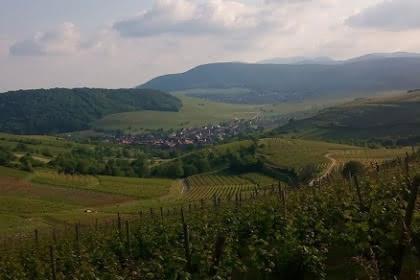 Vignoble et collines sèches, Pays de Rouffach, Vignobles et Châteaux, Haut-Rhin, Alsace (Pragma-SCF)