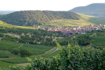 Westhalten, Pays de Rouffach, Vignobles et Châteaux, Haut-Rhin, Alsace