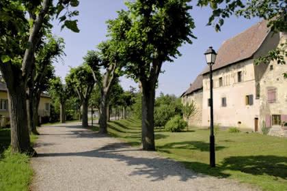 Rouffach, Canton de Rouffach, Haut-Rhin, Alsace (P. André - Ville de Rouffach)
