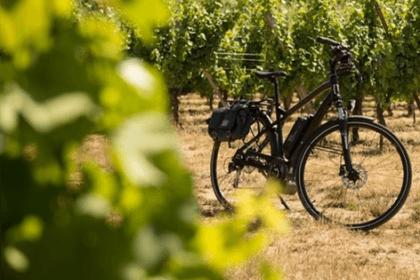 Le paysage à bicyclette, Pays de Rouffach, Vignobles et Châteaux, Haut-Rhin, Alsace