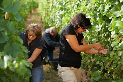 Travail de la vigne - ©S.Spach