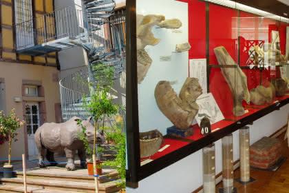 Musée d'histoire naturelle et d'ethnographie, Colmar, Alsace  www.museumcolmar.org Crédit photo : Office de Tourisme de Colmar